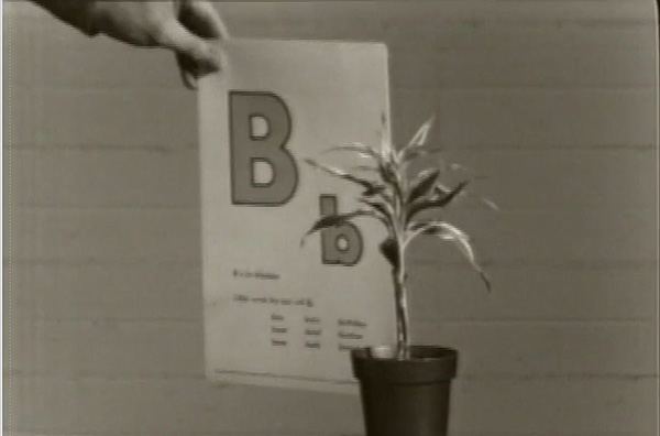 Screen shot from John Baldessarii's movie Teaching a Plant the Alphabet from 1974